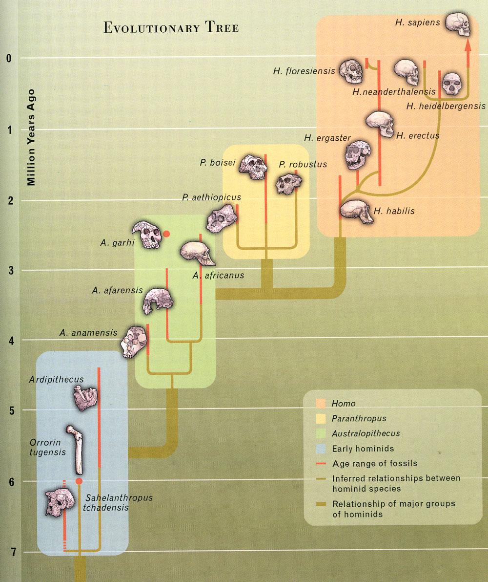 evolutionary-tree.jpg