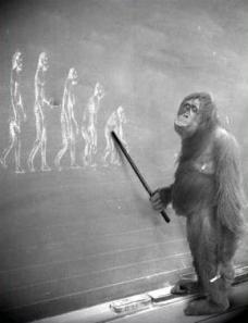 evolution-ape-teaching