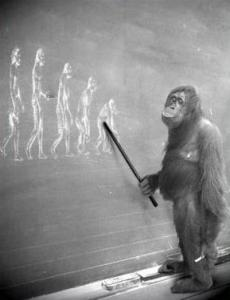 evolution-ape-teaching