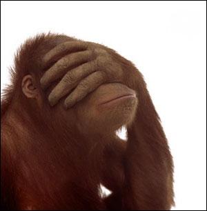 Fotografije životinja - Page 4 Monkey-frustrated