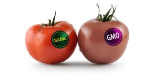 organic-gmo1